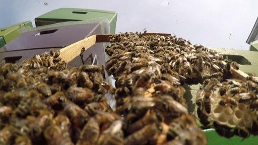 Bienenvolk Imker