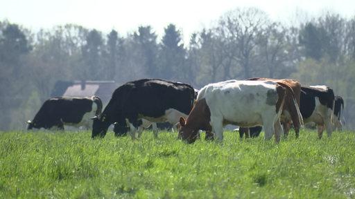 Es sind mehrere Kühe auf der Weide.