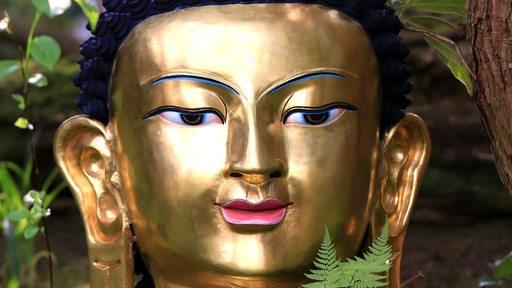 Der neue Buddha in der Botanika