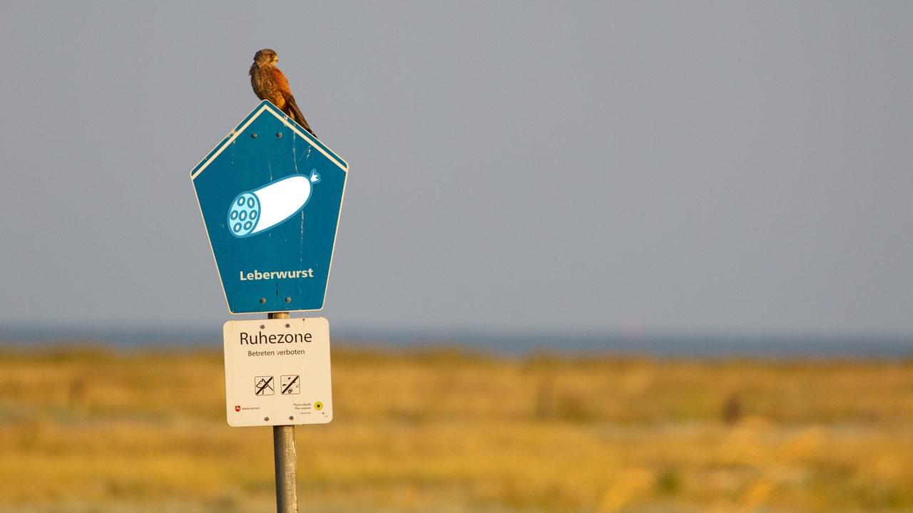 Ruhezone-Leberwurst-R-tsel-um-Ostfrieslands-kuriose-Flurnamen