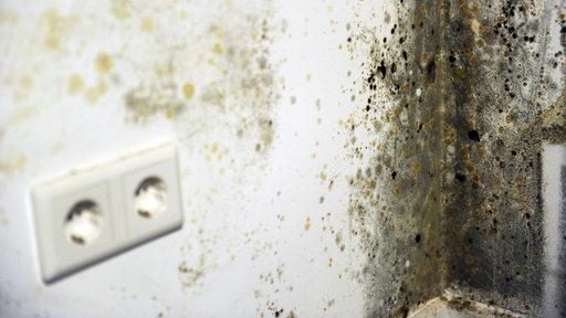 Schimmel an einer Wand in einer Wohnung