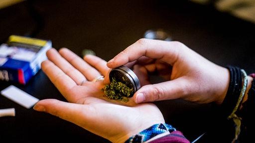 Cannabis auf einer Hand