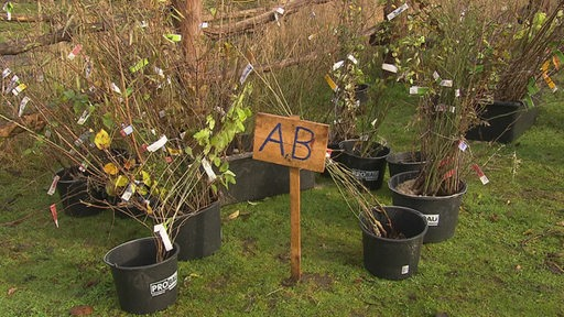 Saison-Pflanzen des Wildsträuchermarkts von NABU stehen abholbereit.