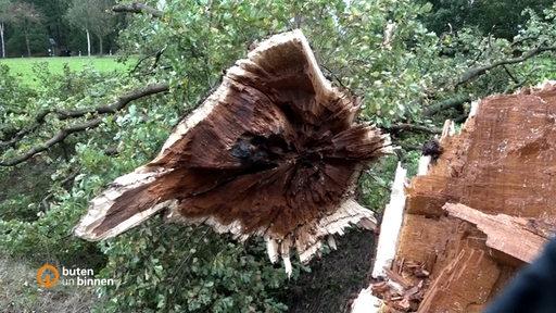 Ein abgebrochener Baumstamm nach einem schweren Unwetter.