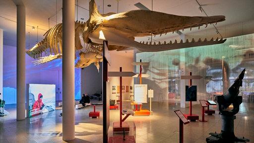 Walskeletts hängt an der Decke der Ausstellung im Deutschen Schifffahrtmuseum Bremerhaven