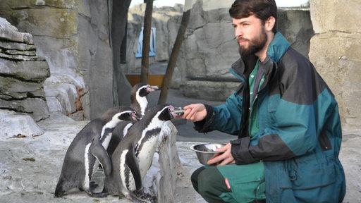 Marc Tetzlaff beim Füttern von Pinguinen